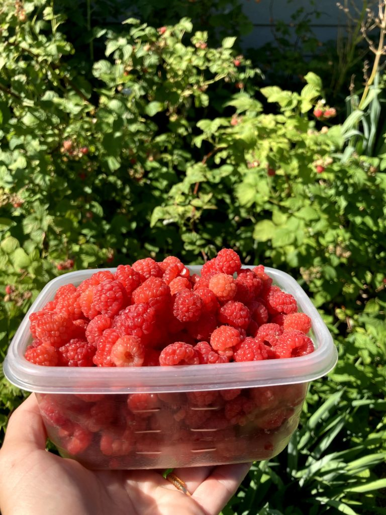 Raspberries can be productive, even if you don't extensively thin them