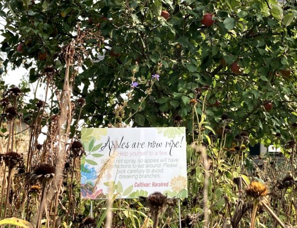 sharing your bounty - apple tree sign