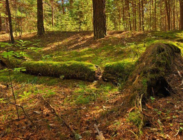 Nature's chop-and-drop mulching Image by Larisa Koshkina from Pixabay