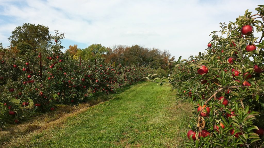 This orchard requires a lot of inputs, because it is missing many functions that an ecosystem would fulfill.